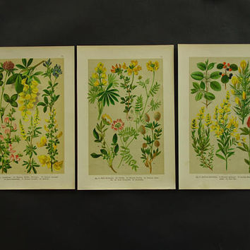 Old botanical prints set of three 3 matching original 1896 vintage floral poster flower print flowers affiche botanique print 20x30c 8x12""