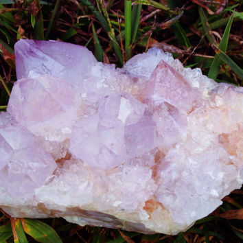 "Cactus Amethyst Spirit Quartz Cluster 475 g 4.5X3X2.75"" Charged Reiki Infused Protection Immunity Transformation Meditation, Higher Self"