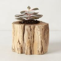 Tree Trunk Planter by Anthropologie Neutral One Size Garden