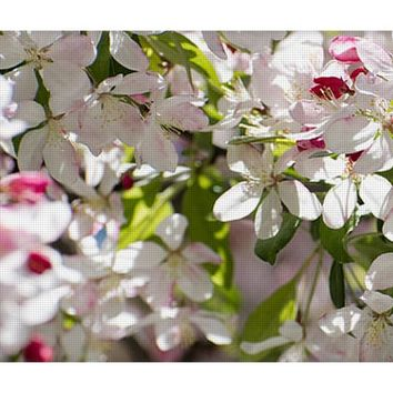 Apple Tree Blooming Yoga Mat