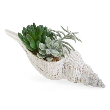 ALLSTATE Large Succulent Garden in Shell | Nordstrom