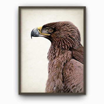 Eagle Art Print - Vintage Bird Of Prey Illustration Wall Art - Raptor Art Print - Eagle Art Poster - Fine Art Reproduction Print (AB304)
