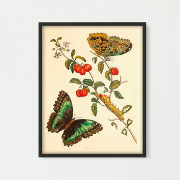 Barbados Cherry Tree Printable, Moth Wall Art, Botanical Vintage Art Print, Fruit Butterfly and Caterpillar by Maria Sibylla Merian