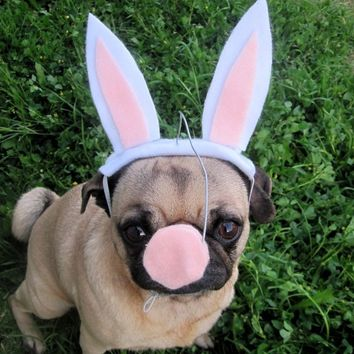 EASTER BUNNY with NOSE dog or cat hat - small / medium pets