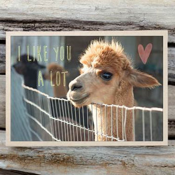 Alpaca Greeting Card - I Like You A Lot