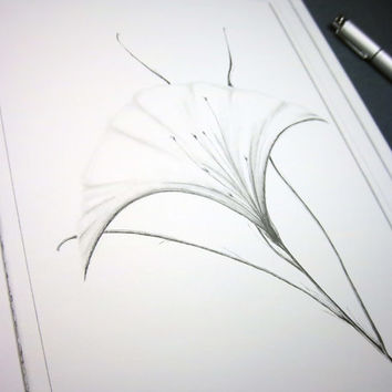 WHITE ELEGANCE:  Original art minimalist floral drawing in pen and ink with black colored pencil, black and white, 9x12