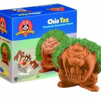 Chia Taz Collectable