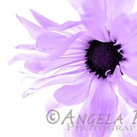 Purple Flower - Fine Art Print - 8x12