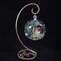 Airplant/Tillandsia 4in Orblet on Orb Stand with by PlantOddities