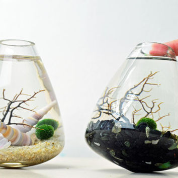 Marimo Terrarium - Japanese Moss Ball aquarium - Rolling Vase - Sea Fan - Sand - Shells