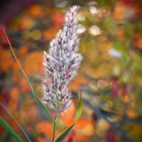 Fall Prairie Grass, Digital Art Print, Autumn Decor, Home, Ready to Frame Photo, Wall Hanging, Rustic Orange, Nebraska Nature, Brown, Green