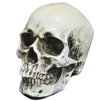 Kid's Halloween Gags and Practical Jokes Toys Resin Realistic Skull Party Carnival Haunted House Props