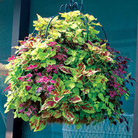 16 Inch Double Tier Imperial Hanging Planter | Kinsman Garden