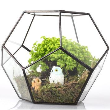 Geometric Pentagon Irregular Glass Terrarium Box