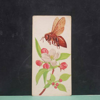 Vintage Honeybee Insect Flash Card Color Illustration Paper Ephemera Art Decor Nature Bug Collage Crafts Supply