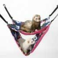 Marshall Pet Ferret Deluxe Hammock Assorted