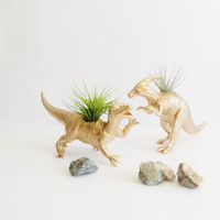 Dino Planters in Gold/Air Plants