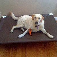 Large Canvas Dog Cot. 44x44x10 High. Indoors Or Outdoors. Pet Dog Bed Or Cat Bed. | DianesK9Creations - Pets on ArtFire