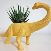 Beatrice the Apatosaurus Planter & Succulent by PlaidPigeon