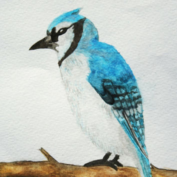 SALE Blue Jay watercolor PRINT, bird watercolor painting, art print, nursery art, boys and girls art, bird art, archival art print 5x7