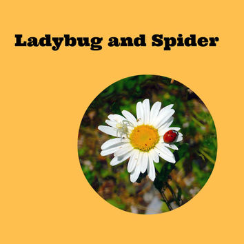 Ladybug & Spider (1): The Worms' Wedding