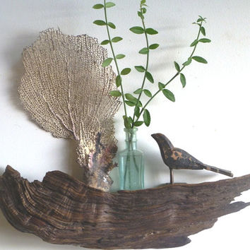 Divine Driftwood Shelf Adds a Touch of Nature to Any Wall and Makes a Perfect Gift