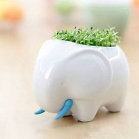 Home Decor DIY Rhino Plant by 99 Crowncat
