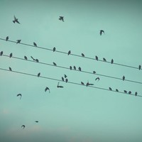 Birds on a wire travelling Stretched Canvas by SUNLIGHT STUDIOS | Society6