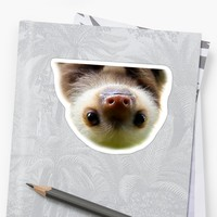 'cute baby sloth' Sticker by pgracew