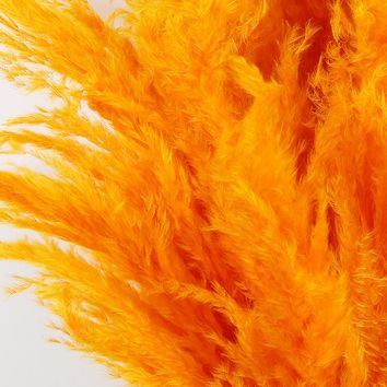 "Dried Pampas Grass in Bright Orange - 5-6 Stems per Bunch - 30""-42"" Tall"