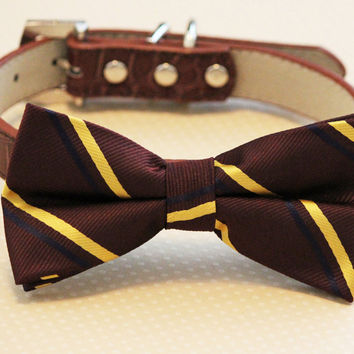 Brown and Gold dog bow tie with collar, Brown Wedding accessory