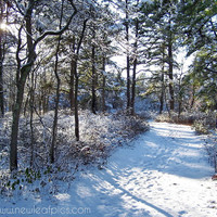 Art Nature Photography, Winter Landscape photo, snow covered trail, 8x10 fine art print