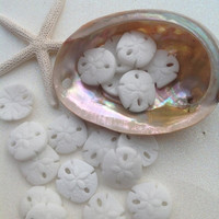 Supply Sale SEA Glass, Sand Dollar Bead, Seaglass Beads, Jewelry Supplies-2 pcs small size  Opaque WHITE Sand dollar sea glass, beach glass,