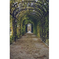 Vine Garden Door Walkway Printed Backdrop - 6795