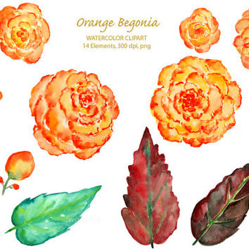 Watercolor Clipart - Orange Begonia printable instant download for  wedding invitations, greeting cards