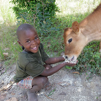 Donate A Cow To Charity | Heifer International | Charity Ending Hunger And Poverty
