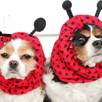 Ladybug  Dog Snood - Stay-Put 3 Rows Elastic Thread - Specialty Dog snood - Cavalier or Cocker long ear covering