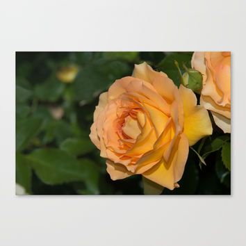 Eureka Rose Canvas Print by Glenn Franco Simmons