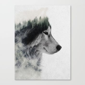 Wolf Stare Canvas Print by Andreas Lie