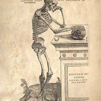 11x14 Vintage Anatomy Leaning Skeleton Human Body by curiousprints