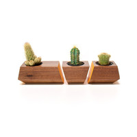 3 Pc. Solid Walnut Wood Planters in Orange