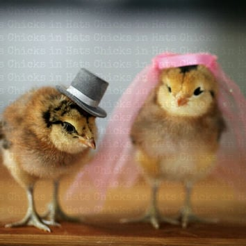 Chicks in Wedding Hat and Veil Refrigerator Magnet
