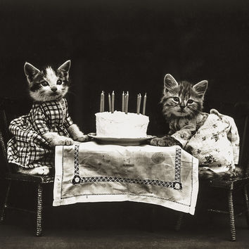 The Birthday Cake with Cats