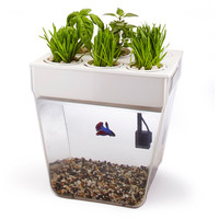 I liked this design on #Fab. Water Garden Aquarium