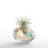 Small Sea Glass Terrarium