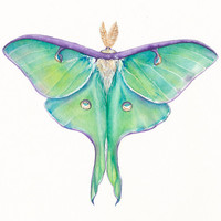 Luna Moth (Actias luna) – original watercolor