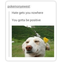 Be positive dog tumblr