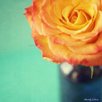 rose, teal, peach, blue, flower, fine art photography