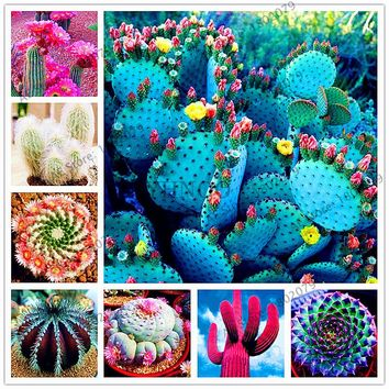 Hot selling205pcs/bag  Mixture Of Cactus Seeds ,succulent plants Seeds forhome and garden, High Germination