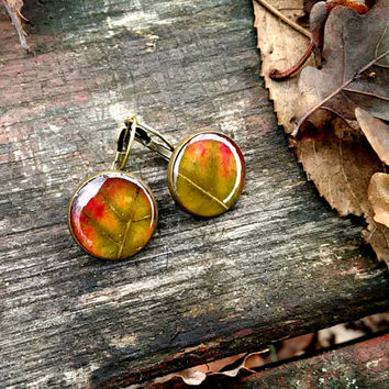Colourful real leaf earrings - Pressed autumn leaf jewelry - Nature inspired jewelry - Autumn earrings - Bronze round - French earwire hooks